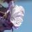 LavenderPoet