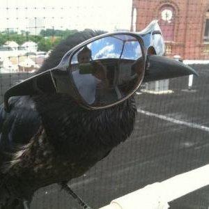 Columnist Crow on Twitter:
