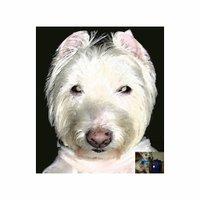 mpav  Fierce Terrier