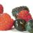 Ol Mill Berries