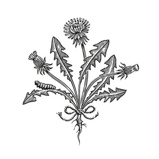 Logo de la société LINNAEAN