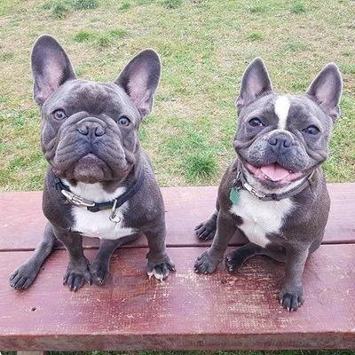 Winston and Lola