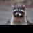 @chemist_raccoon