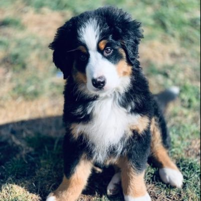Lincoln The Berner