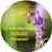 St Andrews Ridge Pollinator Pathways