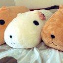 yuki_nohina