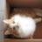 Despairing Cat