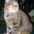 wistercat