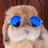 Smut Bunny