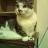 猫山 珠のアイコン