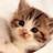 猫の可愛い写真集
