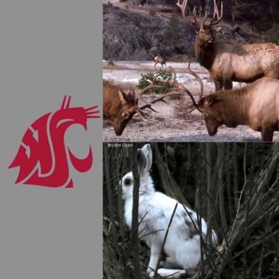 WSU Wildlife Ecology's March Mammal Madness! (@WsuMarch) Twitter profile photo