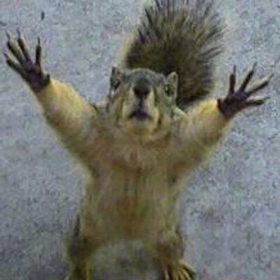 Dead Squirrel (@Dead_Squirrel) | Twitter
