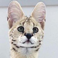 고양잇과의 전당