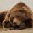 The_NZ_bear's avatar'
