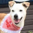 札幌老犬ホーム&ペットホテル 逢犬はうす
