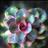 Succulent Plant 💐
