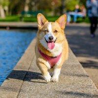 The Good Doggo Life