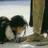 SherryMerideth's avatar