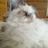 💔😢JoyceF🌊💔😢💙🦋💙 (@melgibsonsmrsme) Twitter profile photo