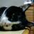 shimerson's avatar'