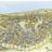 La península ibèrica a l'edat mitjana