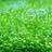 【水草・植物】チャーム公式