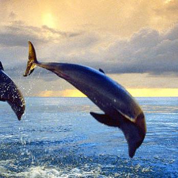 춤추는돌고래