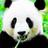 PANDA in TЯANSITのアイコン