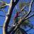 Fast Tree Dunwoody
