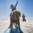 Surf Dog Ricochet