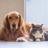 Cat & Dog Lovers