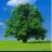 Bk tree normal