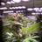 Enlite_lighting
