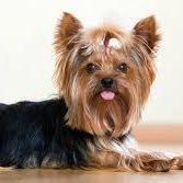 Generic Dog Avi