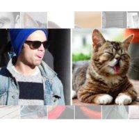 Sebastian Stan As Cats