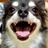 かわいい犬の動画&写真集