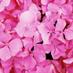 Joe_K またの名を【紫陽花】:花言葉は浮気のアイコン