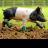 Pig In Wellies