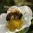 Functional Agrobiodiversity & Agroecology