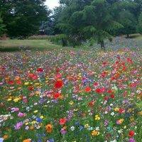Lily meadows (@Lilymeadows10 )