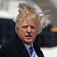 Trump's Hairpiece (@HairpieceTrump) | Twitter