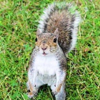 ecusquirrels