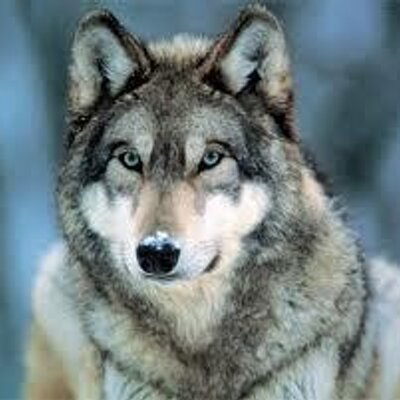Ouderwetse Rieten Strandstoel.Wolf Rempt On Twitter Marloespomp Ahrendoffice What