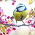 buddythebird.forBidenHarris Profile picture