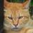 たぬき猫 (@tanukinekoyo)