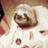 AnyoneElse2020 ( @AceTadace ) Twitter Profile