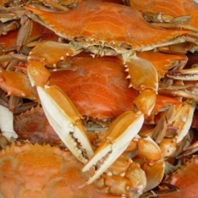 NV Seafood Wholesale (@NVSeafoodWhole) | Twitter