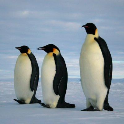 🎮 Sakitu Pingüins 🐧 (@PinguinsSakitu) | Twitter
