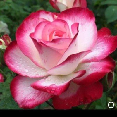 @rosevine3